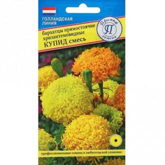 Бархатцы хризантемовидные Купид, смесь окрасок изображение 5