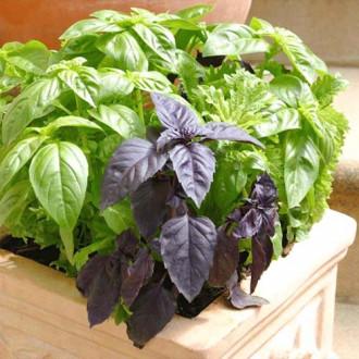 Базилик Челентано, смесь семян