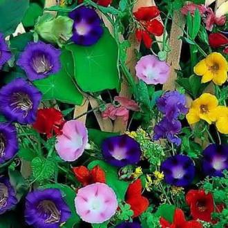 Декоративная смесь Вьющихся однолетников, смесь окрасок изображение 1