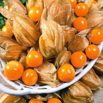 Физалис овощной Лакомка изображение 4