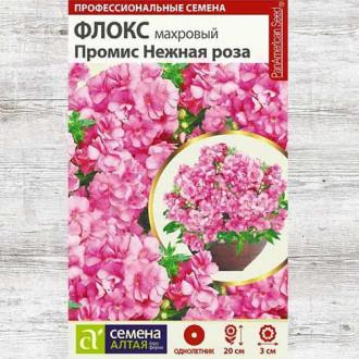 Флокс Промис Нежная роза