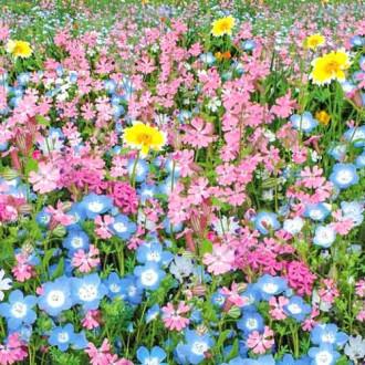 Газон цветущий Цветущий город, смесь окрасок изображение 2