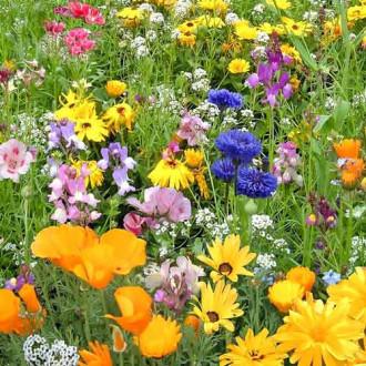 Газон цветущий Детская лужайка, смесь окрасок изображение 3