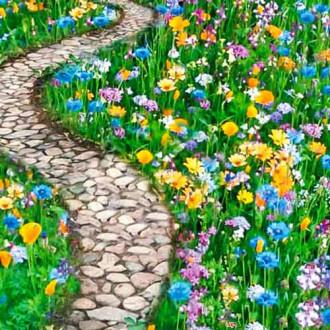 Газон цветущий Дорога к дому, смесь окрасок изображение 2