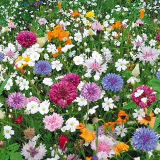 Газон цветущий Эко-Магистраль, смесь окрасок изображение 4