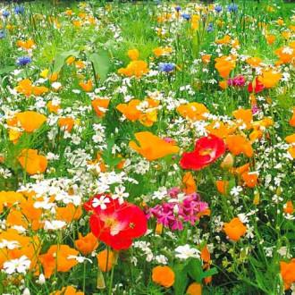 Газон цветущий Гольф Аристократ, смесь окрасок изображение 4
