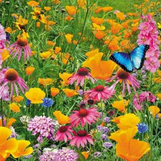 Газон цветущий Рай для бабочек, смесь окрасок изображение 1