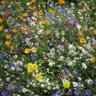Газон цветущий Сибиряк, смесь окрасок изображение 5
