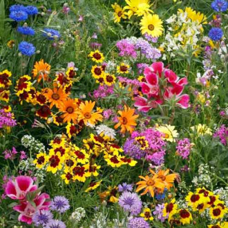 Газон цветущий Солнечная долина, смесь окрасок изображение 7