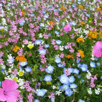 Газон цветущий Восточный орнамент, смесь окрасок изображение 6