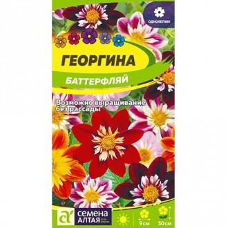 Георгина Баттерфляй, смесь окрасок