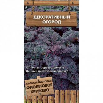 Капуста листовая Фиолетовое кружево изображение 4