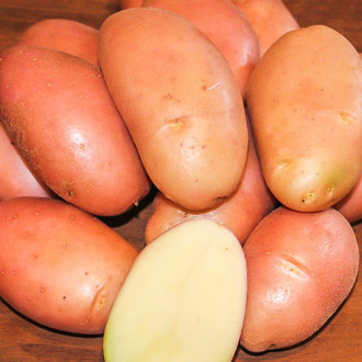 Картофель Фаворит