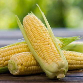 Кукуруза сахарная Королева изображение 8