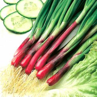 Лук на зелень Красное перо изображение 3