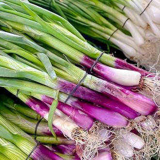 Лук на зелень Первые витамины, смесь семян изображение 6