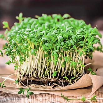 Микрозелень Базилик овощной, смесь семян изображение 6