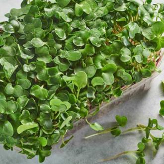 Микрозелень Дайкон изображение 8