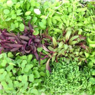 Микрозелень Пикантная, смесь семян изображение 6