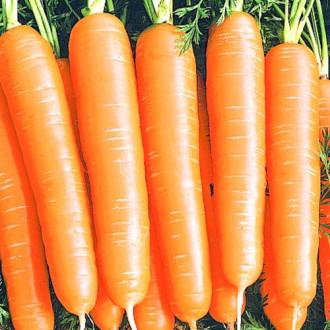 Морковь Алтайская сахарная