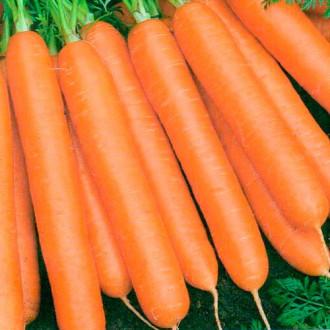 Морковь Балтимор F1 изображение 3