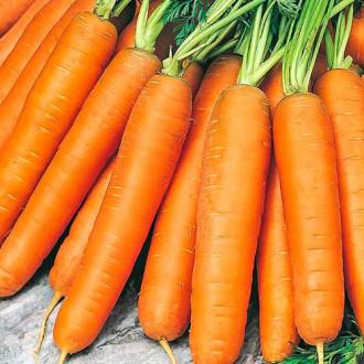 Морковь Берликум Роял изображение 1