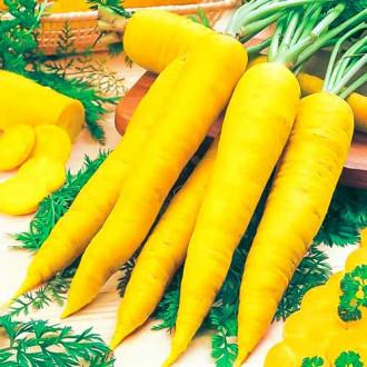 Морковь Чаровница золотая изображение 7