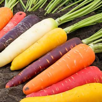 Морковь Детская грядка радуга, смесь семян изображение 5