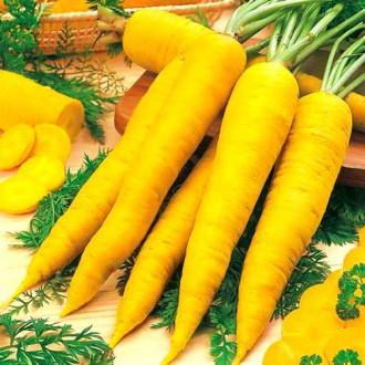Морковь Карамель желтая изображение 6