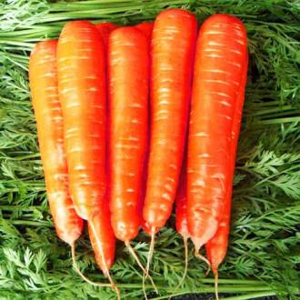 Морковь Карамель красная изображение 2