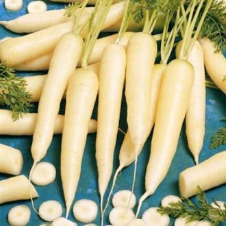 Морковь Карамель сахарная изображение 6