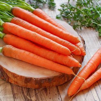 Морковь Концерто F1 изображение 2
