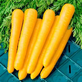 Морковь Мармелад желтый изображение 5