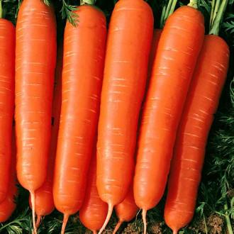 Морковь Мармелад красный изображение 3
