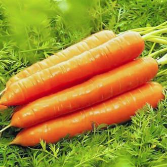 Морковь Медовая сказка изображение 4