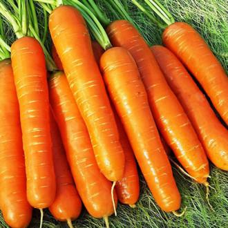 Морковь Нантская премиум изображение 3