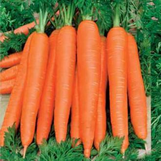 Морковь Осенний король изображение 8