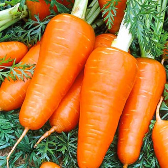 Морковь Ред Кор изображение 3