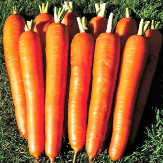 Морковь Сахарный гигант изображение 4