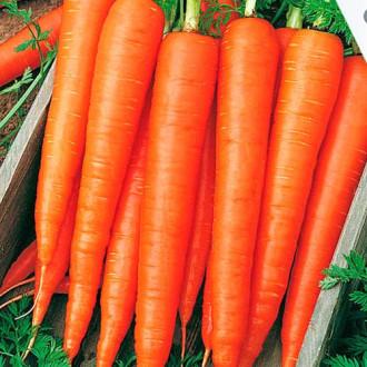 Морковь Санькина любовь F1 изображение 6