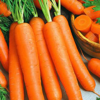 Морковь Шармэль изображение 5