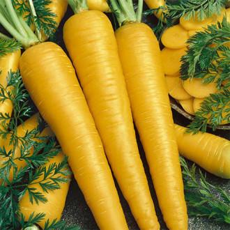 Морковь Золотой кролик изображение 5