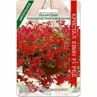 Пеларгония плющелистная ампельная Кристал Квин Ред F1 изображение 7