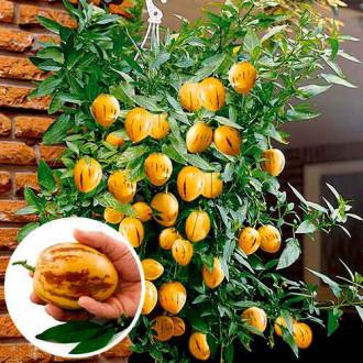 Пепино (дынная груша) Консуэло изображение 1