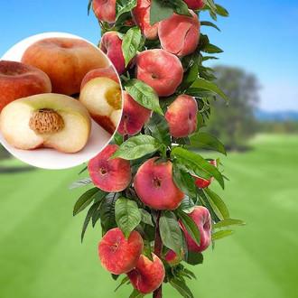 Персик колоновидный инжирный изображение 5