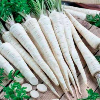 Петрушка корневая Урожайная изображение 1