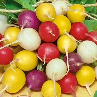 Редис Черешневый сад, смесь семян изображение 8