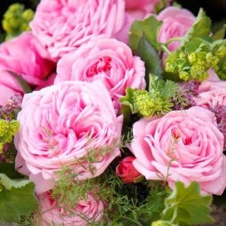 Роза флорибунда Саммер Романс изображение 5