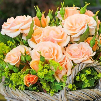 Роза флорибунда Свит Хоней изображение 1