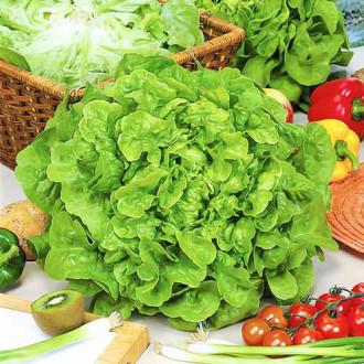 Салат маслянистый Изумительный изображение 5
